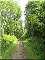 NJ2042 : Strathspey Railway trackbed by Richard Webb
