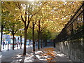 NZ2464 : A Lost View - Autumn Trees in Newcastle by Andrew Tryon