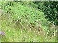 SN9571 : Fence in the ferns by Bill Nicholls