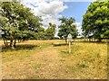 SK9237 : Belton Park by David Dixon
