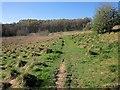 SE2863 : Nidderdale Way in the Cayton Beck valley by Derek Harper