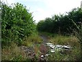 SE5106 : The byway east from Freestone Quarry Plantation by Christine Johnstone