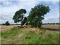 TL2265 : Treeline near Offord D'Arcy by Marathon