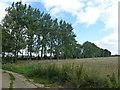 TL1087 : Strip plantation west of Lutton by Richard Humphrey