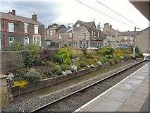 SK0394 : Glossop Station garden by Gerald England