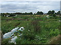 TL2886 : Allotments near Ramsey off Stocking Fen Road by JThomas