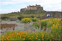 NU1341 : The walled garden at Lindisfarne Castle by Jim Barton