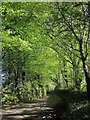 SX3471 : Lane near Maders by Derek Harper