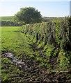 SX3472 : Hedge near Jericho by Derek Harper