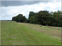 ST1006 : Bridleway on North Hill by David Smith