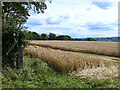 NY5442 : Field of barley near Staffield by Oliver Dixon