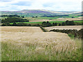 NY5644 : Barley field near Mastone Steps by Oliver Dixon