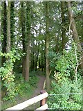 ST0905 : Path through woodland north of Bowerwood by David Smith
