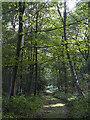 SJ5450 : Woodland track by William Starkey