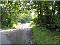 ST1105 : Track into Stafford Moor woods by David Smith