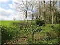 SO6883 : Woodland near Stottesdon by Richard Webb