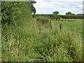 SU8572 : Overgrown footpath by Alan Hunt