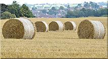 J3267 : Bales near the Giant's Ring, Belfast - August 2014(4) by Albert Bridge