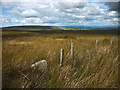 SD6361 : Boundary stone on Goodber Fell by Karl and Ali