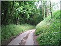 ST8194 : June in a Cotswold lane-Newington Bagpath, Glos by Martin Richard Phelan