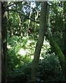 SP3075 : Small derelict sandstone quarry, University of Warwick campus, Coventry by Robin Stott