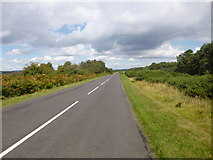 SY8086 : Winfrith Heath, road by Mike Faherty