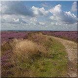 SE8493 : Towards Levisham Moor by Pauline E