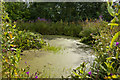 SJ4189 : Wetland habitat at The National Wildflower Centre by Ian Greig