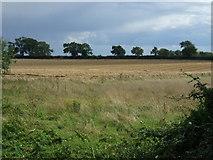 TL0393 : Farmland near Woodnewton by JThomas
