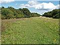TQ0550 : Woodland ride, Clandon Downs by Alan Hunt