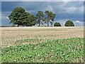 TQ0650 : Tree clump, Clandon Downs by Alan Hunt