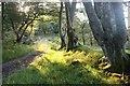 NS1268 : Morning sunshine reaches the track above Toward farm by Alan Reid