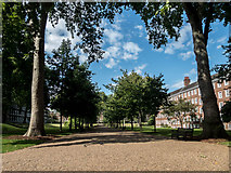 TQ3081 : Gray's Inn Gardens, London WC1 by Christine Matthews