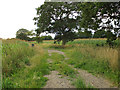 SP1069 : Track through maize near Trap's Green by Robin Stott