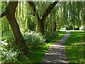 SU8446 : Walkway through the willows by Alan Hunt