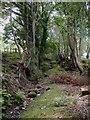 SH7569 : Hollow way near Tyddyn Rhobin by Christopher Hall