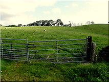 H6156 : Gate, Tullybyran by Kenneth  Allen