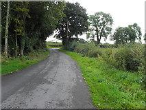 H6256 : Richmond Lane by Kenneth  Allen
