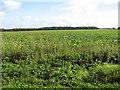 TG2813 : Fields by Rackheath by Evelyn Simak