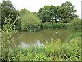 SJ5045 : Pond at Bradley Green by Jeff Buck