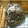 SP2429 : Wasps' nest and cobwebs, Chastleton House, Chastleton, Oxfordshire by Brian Robert Marshall