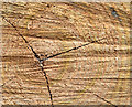 J4581 : Tree rings, Crawfordsburn (September 2014) by Albert Bridge
