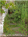 SP2556 : Charlecote Park - overgrown steps by Chris Allen