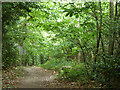 TQ3865 : Path, Spring Park woodland by Robin Webster