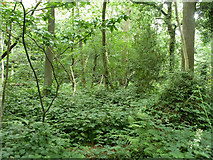 TQ3765 : The northern finger of Threehalfpenny Wood by Robin Webster