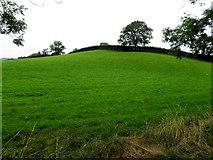 H6155 : A low hill, Drumcorke by Kenneth  Allen