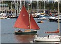 SX8851 : Yacht, Dartmouth Regatta by Derek Harper