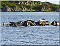 NR4649 : Common Seals on Sgeir nam Ban, Islay by Becky Williamson
