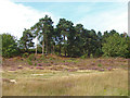 SU8450 : Lowland heath near Aldershot by Alan Hunt