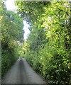 SX3957 : Lane from Elm Gate by Derek Harper
